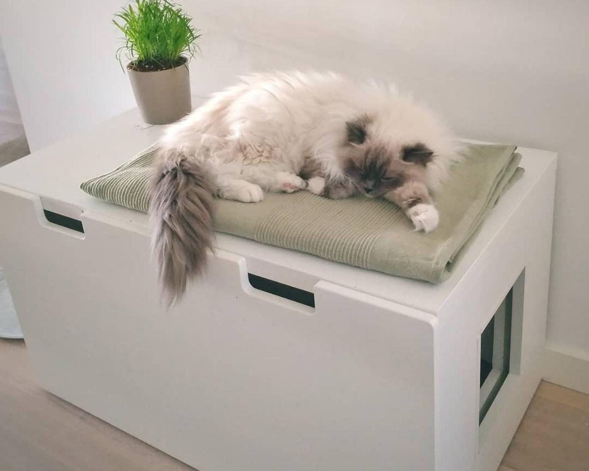 Katzenklo inkognito